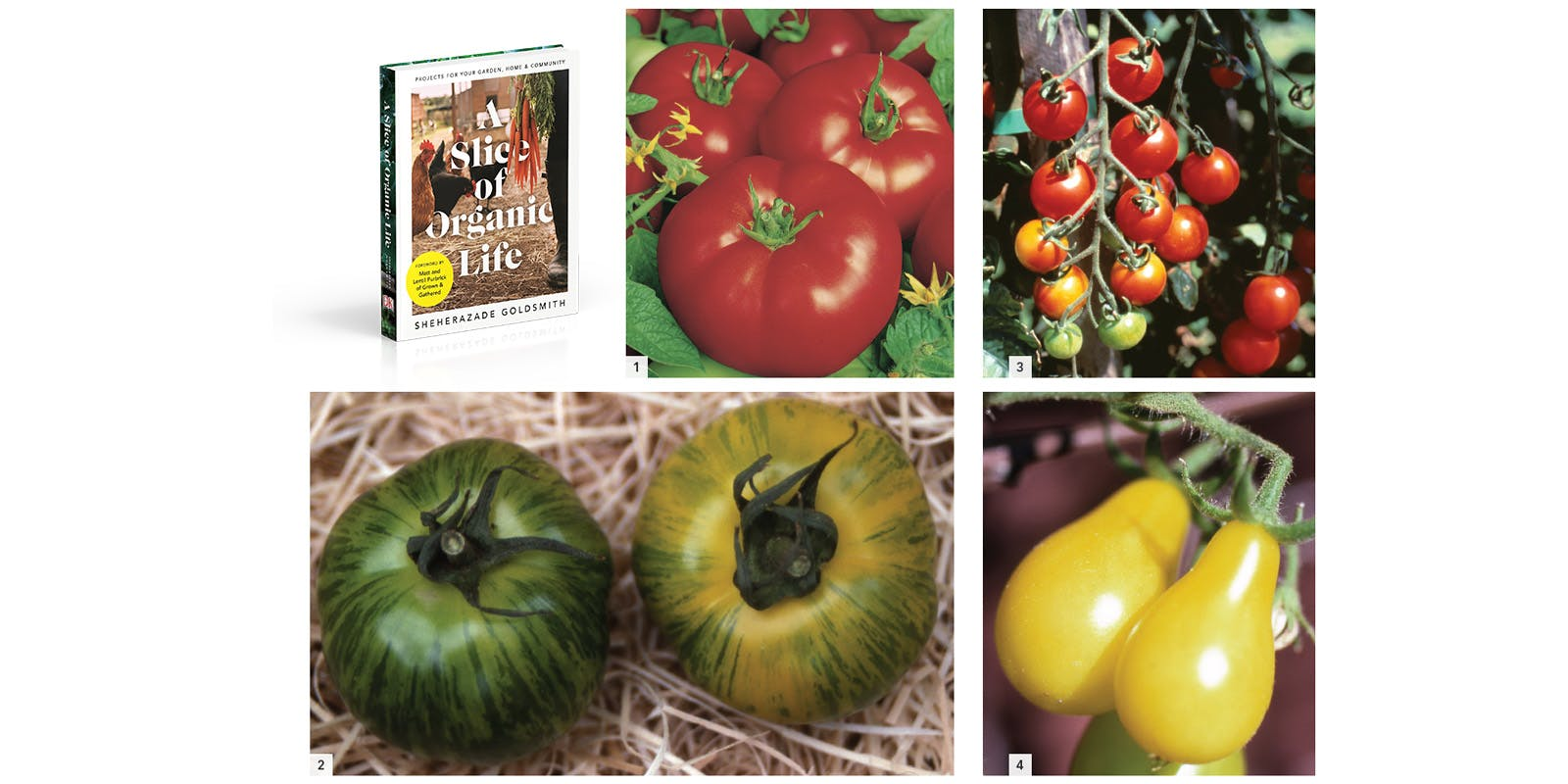 Grow pots of tomatoes
