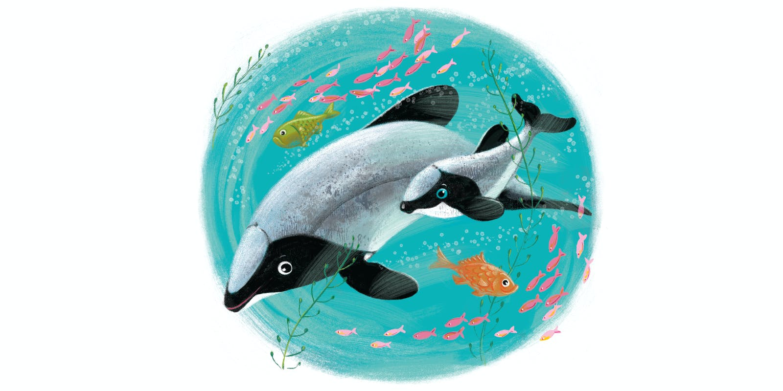 All about the Hector's Dolphin