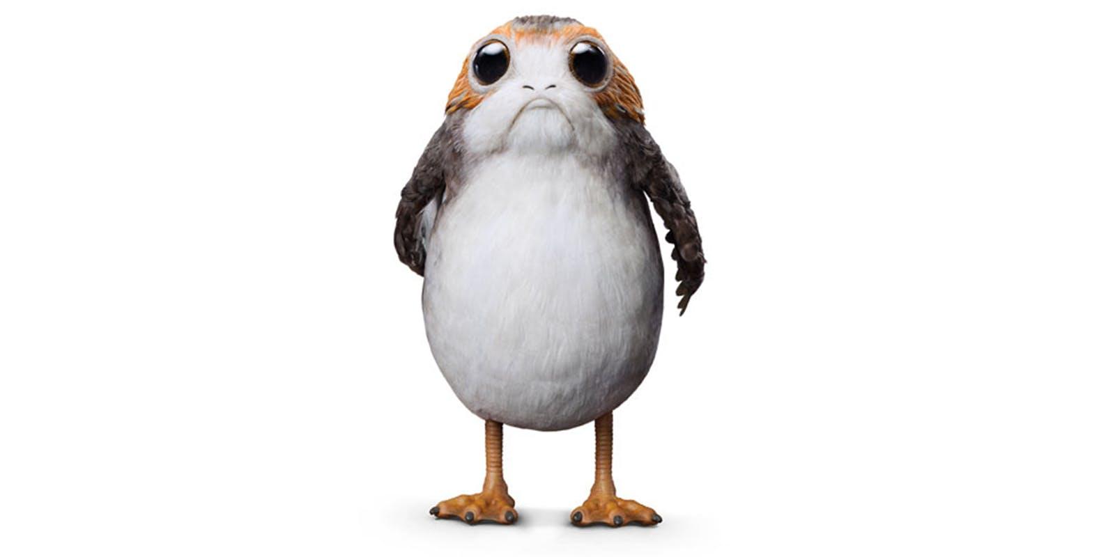 Meet Porgs: the heartwarming seabirds of Star Wars: The Last Jedi™